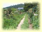 Monets_garden